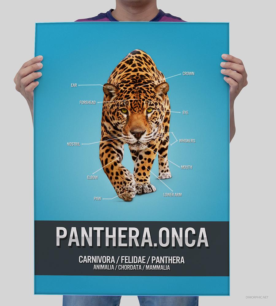 Panthera.Onca